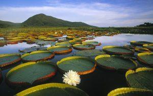 UFLA é parceira do projeto Amazônia Protege lançado pelo Ministério Público Federal